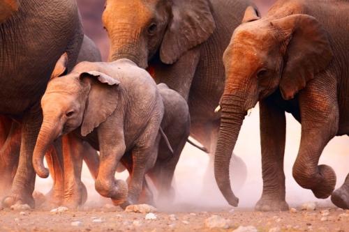 Gluten free in South Africa safari