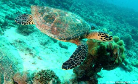 Seychelles-tortoise