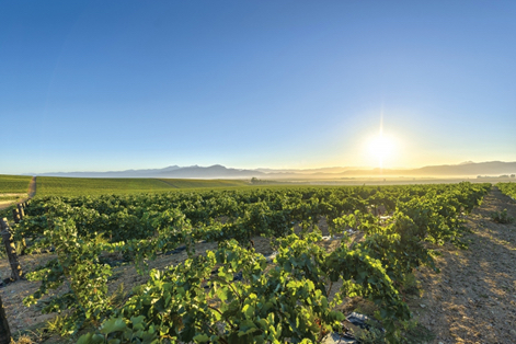 South-Africa-Cape-Winelands